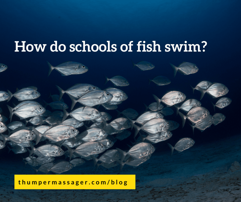 How do schools of fish swim?