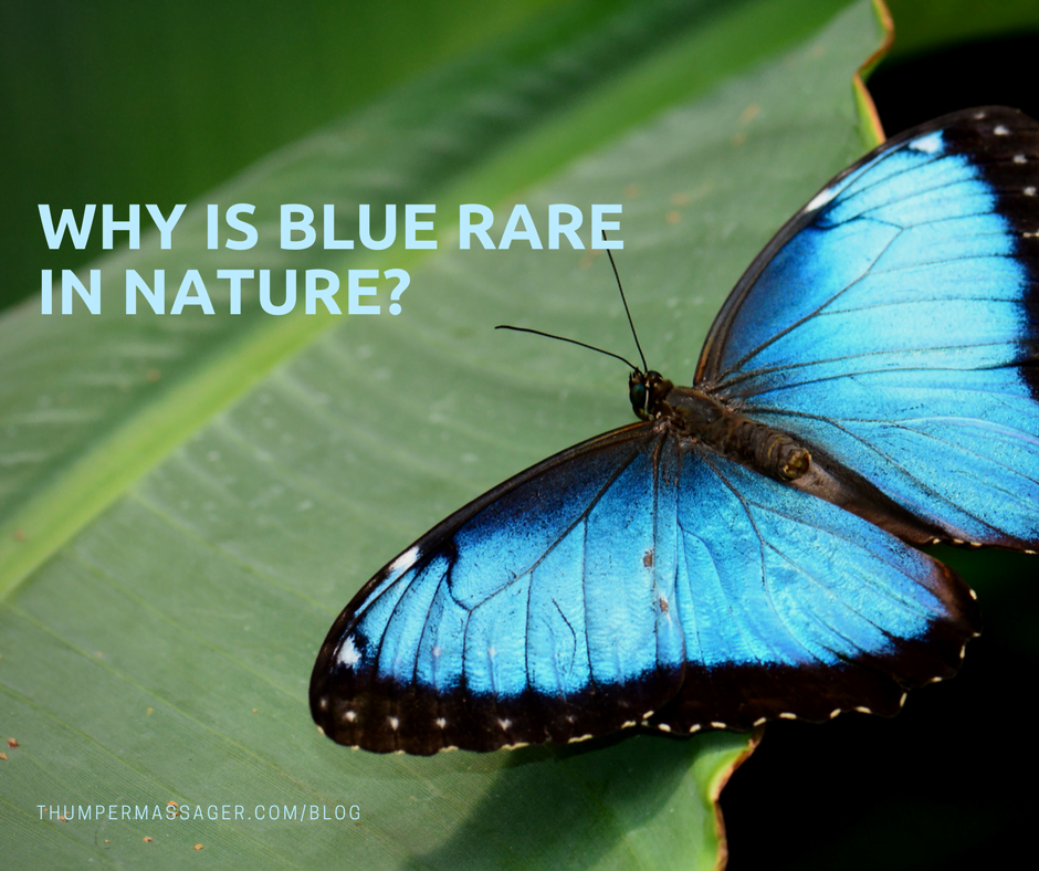 Why is blue rare in nature?